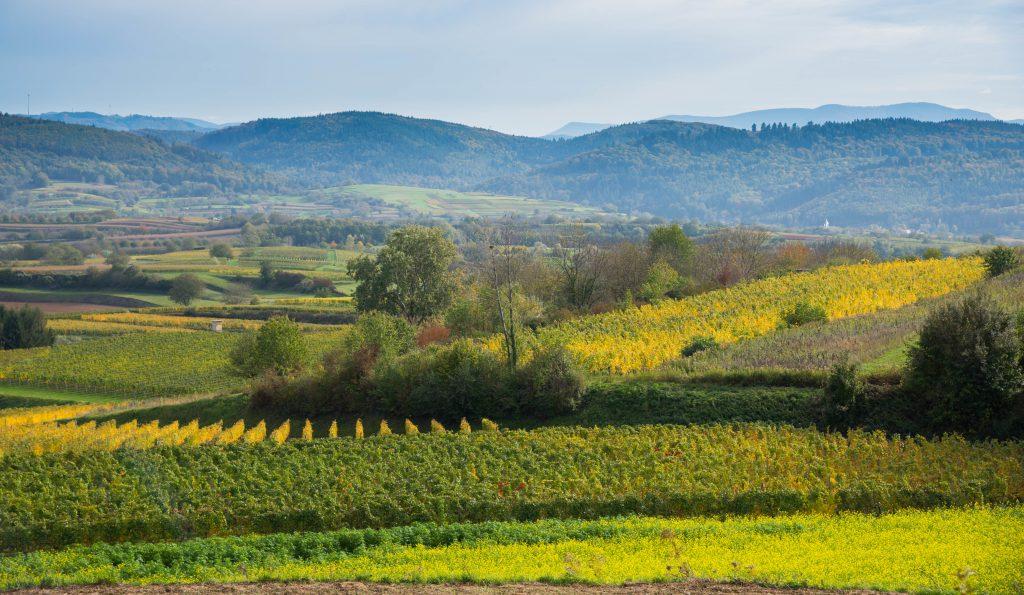 Die Umgebung von Ettenheim zeit hier Berge und viele verschieden farbige Felder